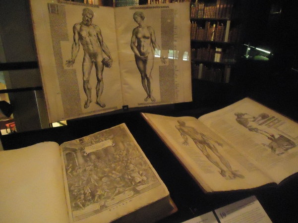"The standing book, featuring ""Adam & Eve"" is the Epitome, which was published as a condensed version of de Fabrica and intended for students. It cost one-sixth of the price and consisted of 12 folio leaves. Most of the illustrations here are reproduced from Fabrica, but some new ones are added for the purposes of instruction, including ""Adam and Eve."""