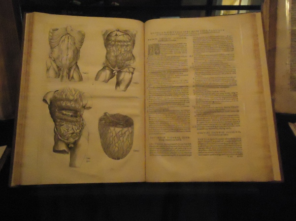 When Vesalius sent his manuscript and woodblocks of illustration to his printer Johannes Oporinus, he attached a letter with specific instructions for printing. The letter included descriptions on how to align the text and illustrations. As well, Vesalius asked Oporinus to forbid anyone from printing any of the illustrations without his consent.  This book is the first unauthorized reproductions of the plates of Fabrica: Thomas Geminus, an engraver and printer from Flanders, who produced Compendiosa totius anatomie delineation (London: John Herford, 1545) under the command of King Henry VIII of England who wanted to improve the state of surgery. The Compendiosa was the first English book to have an engraved title page. In 1553, Geminus produced an English version for surgeons who did not know Latin; the English version was re-issued in 1559 with an engraving of the newly-crowned Queen Elizabeth.