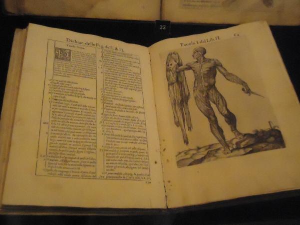 Another plagiarism: Juan de Valverde de Amusco, Anatomia del corpo humano (Rome: Ant. Salmanca & Antonio Lafreri, 1560).